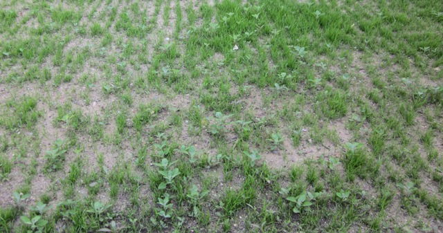 Beliebt Bevorzugt Rasenpflege &BY_95